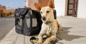 dog near carrier to head to the vet